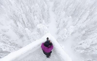 Vinter Vitbergen
